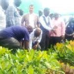 AFA to give cashewnut and coconut seedlings in a drive to boost food production