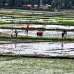 TARDA avails Sh70 m to revive the Tana Delta Irrigation Schemes