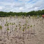 Kwale to Plant 5 million Seedlings despite Corona Pandemic
