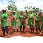 New Cassava Variety to boost farmers' yields if approved in Kenya